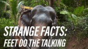 Did you know that elephants can talk with their feet?