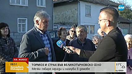 Мечка събаря огради и нахлува в домове в село Пушево