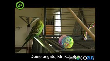 Този папагал ще ви разбие от смях