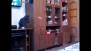 Коте майстор на пинг-понга
