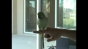Папагал прави неприсъщи за птица неща