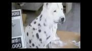 Как Да Направите Кучето Си По Свой Вкус