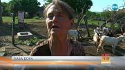 Баба Дора, жената, която развълнува цяла България