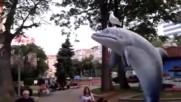 Гларус върху делфин в центъра на Бургас :)