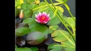 Quinn - Lotus 1996