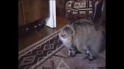 Хахах! Котка имитира стопанката си!