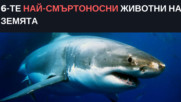 6-те най-смъртоносни животни на Земята