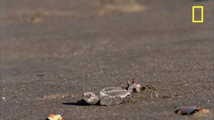 Животинска атака над костенурки !