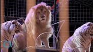 San Francisco Board Approves Wild Animal Performance Ban