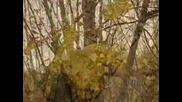 Звукът на есента