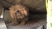 Мъж спасява куче от сигурна смърт