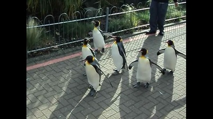 the most cutest penguins in the world