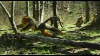 Stunning Disney Nature Documentary 'Born In China' Trailer