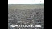 Kopoy 4 www.dog - ejdan.com