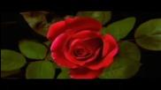 Александру Jula - Не не казвай сбогом на любовта