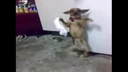 Много Лудо Куче Играе Хоро