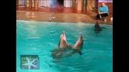 ! Делфини танцуват танго