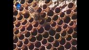 Насаме с пчелите(bg Audio) 4 част