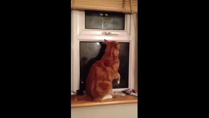 Умно коте си отваря само прозореца!