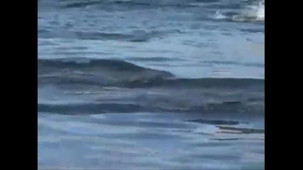 Делфини - красота