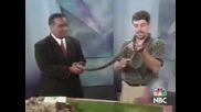 Змията Не Е Проблемна