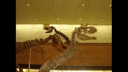 Динозаври И Влечуги