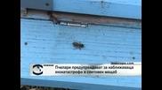 Пчелари предупреждават за наближаваща екокатастрофа в световен мащаб