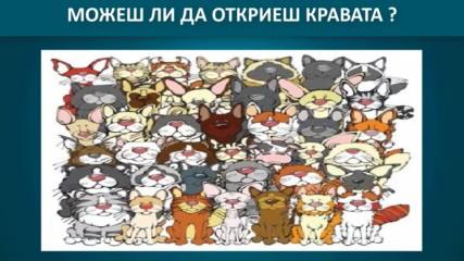 Логическа игра - Открий скритото животно в картината ?