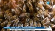 Откриха музей на пчелата в София