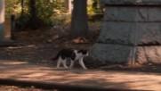 Cats Don't Come When You Call (2016) / Котките не идват, когато ги повикаш 3/3 бг превод