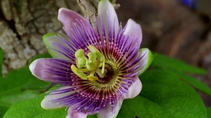 цъфтящи цветя