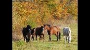 Седем Бели Коня