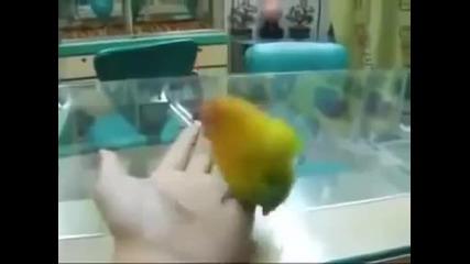 Папагалът, който имитира женски страсти