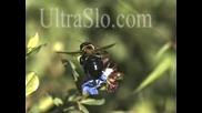 Полет На Пчела, Който Не Си Виждал