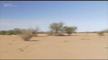 Оцеляване на предела: Аризона (част 1) // Bg Audio // H Q