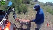 Това не се вижда всеки ден - Моторист спасява малко теленце