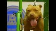 Лоши Кучета