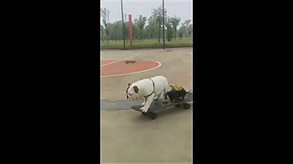 Кученцата карат скейтборд