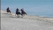 Бургас, морето, конете...