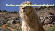 10 Невероятни факти за белите лъвове