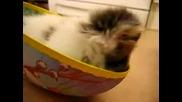 Kitten In Bowl - Malko kote v panica