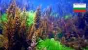 Подводния свят на Черно море
