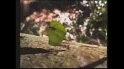 Марш през гората - Мравките в Панама