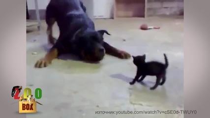 Животните също се плашат :D