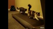 Смях - Котки Върху Бягащя Пътечка