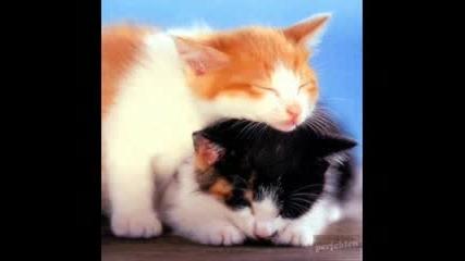 Малки Котенца И Кученца (патета) :D