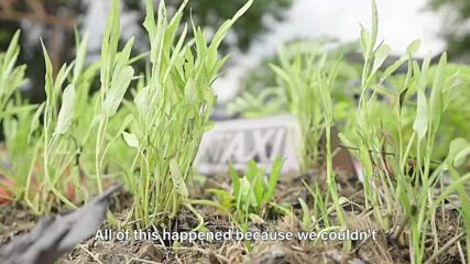 Taxis-turned-vegetable gardens in Thailand
