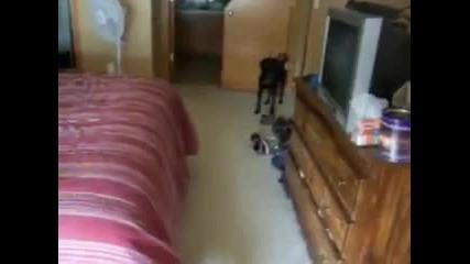 Куче което мрази да го къпят, но обича да го разхождат