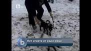Бтв Новиите - Овца роди наведнъж пет агънца в Добричко