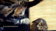 Kittens vs. Dancing Tail